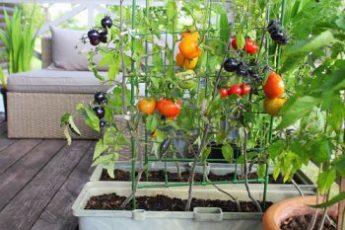 プランター菜園🍃